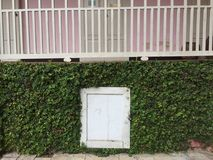 A white small door with green plant on the wall. With vintage filter Royalty Free Stock Photos