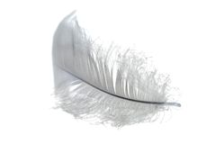 White small feather Stock Photography