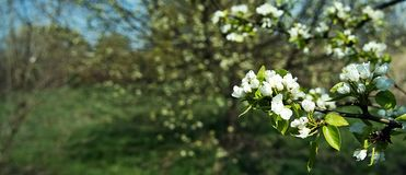 White flowers on a colored background. royalty free stock image