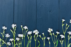 White small flowers. Flat lay. Top view. Royalty Free Stock Images