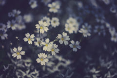 White small  flowers. Summer landscape. Top view Stock Images