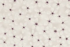 White small flowers on the water. Top. Black and white, sepia. Floral pattern. Wedding, spring background. Macro. stock image