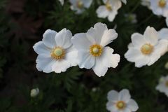 White small flowers royalty free stock photography