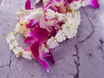 White small fresh real crown flower Giant Indian Milkweed, Swallowwort and purple Thai local orchid garland string messy pile on. Cracked grainy texture grey Stock Image