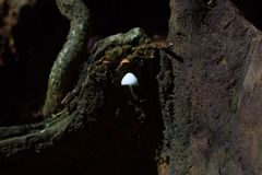 White small mushroom grown on stump in forest stock photography