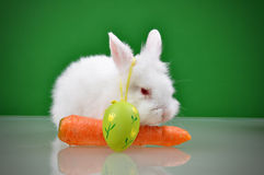 White small rabbit Royalty Free Stock Photo