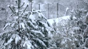 White small snow slowly descends against background of coniferous forest stock video