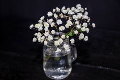 White small wildflowers. On a black background. royalty free stock photos