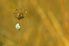 White snail on a dry path in the spring meadow Royalty Free Stock Photo