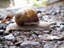 White snail on little rocks Stock Photo
