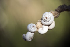 White snail shells on a grass ear against a blurred background Stock Image
