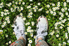 White sneakers in a dasiy field. woman walking. On grass royalty free stock photo