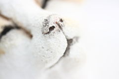 White snow animal. On white backbround royalty free stock photos