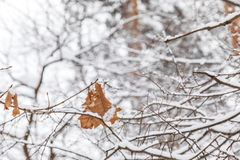 White snow background with red leaf Royalty Free Stock Photography