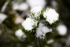 White snow Christmas tree Stock Images