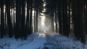 White snow covered drove in between pine trees. Panoramic image of a White snow covered drove in between pine trees during a severe winter in Belgium royalty free stock photos