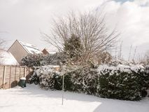 White snow covering back garden hedge tree stock image