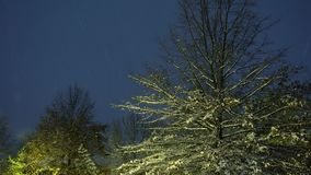 White snow covers trees and branches in the cold winter. Of Snow covered winter falls snow night stock video