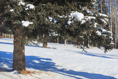 White snow day and big tree Royalty Free Stock Images