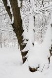 White snow lies on the tree trunk. Weather and nature Royalty Free Stock Photography