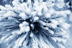 White snow star Royalty Free Stock Photo