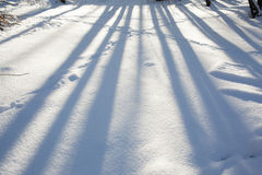White snow surface with tree shadows Royalty Free Stock Photos