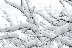 White snow on the tree branch Stock Photography