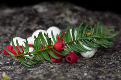 White snowberries and red yew berries arranged with leaves Stock Image