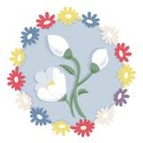 White snowdrop flower on blue circle. Royalty Free Stock Photos