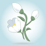 White snowdrop flower on white. Stock Images