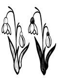 White Snowdrop Flowers Royalty Free Stock Photos