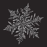 White snowflake on black background. This illustration based on macro photo of real snowflake: large stellar dendrite snow crystal with fine hexagonal symmetry vector illustration