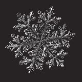 White snowflake on black background. This illustration based on macro photo of real snow crystal: small stellar dendrite with fine hexagonal symmetry, complex vector illustration