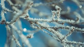 White Snowflake On Tree Branch stock images