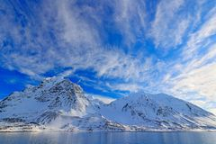 White snowy mountain, blue glacier Svalbard, Norway. Ice in ocean. Iceberg twilight, ocean. Pink clouds with ice floe. Beautiful l royalty free stock photography