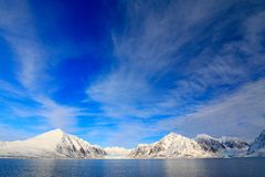 White snowy mountain, blue glacier Svalbard, Norway. Ice in ocean. Iceberg twilight, ocean. Pink clouds with ice floe. Beautiful l. White snowy mountain, blue royalty free stock image