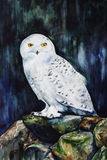 White snowy owl in the forest  watercolor Royalty Free Stock Images