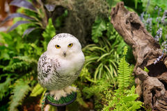 White snowy owl at the garden. White snowy owl portrait at the garden Stock Image
