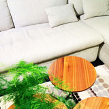 White sofa, coffee table and green plant Stock Image