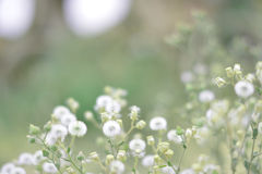 White soft flowers Stock Image