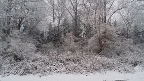 Winter After the Fall. White soft powder of snow rests on everything sturdy. Deep greens and browns are compliments to the trees found. A picture of winter white Royalty Free Stock Image