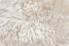 White soft wool texture background, cotton wool, light natural sheep wool, close-up texture of white fluffy fur, wool with beige Stock Photography