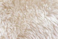 White soft wool texture background, cotton wool, light natural sheep wool, close-up texture of white fluffy fur,  wool with beige. Tone, fur with a delicate Royalty Free Stock Photography