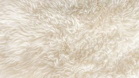 White soft wool texture background. Seamless cotton wool, light natural sheep wool, close-up texture of white fluffy fur, wool with beige tone for designer royalty free stock image