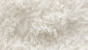 White soft wool texture background, seamless cotton wool, light natural sheep wool, close-up texture of white fluffy fur, wool wit. H beige tone for designer Royalty Free Stock Photos