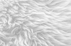 White soft wool texture background, seamless cotton wool, light natural sheep wool, close-up texture of white fluffy fur, wool wit Royalty Free Stock Photography