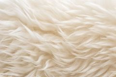 Free White Soft Wool Texture Background, Seamless Cotton Wool, Light Natural Sheep Wool, Close-up Texture Of White Fluffy Fur, Wool Wit Stock Photo - 110128020