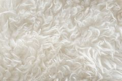 White soft wool texture background, seamless cotton wool, light natural sheep wool, close-up texture of white fluffy fur, wool wit. H beige tone for designer Royalty Free Stock Photo