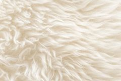 White soft wool texture background, seamless cotton wool, light natural sheep wool, close-up texture of white fluffy fur, wool wit. H beige tone for designer Royalty Free Stock Photography