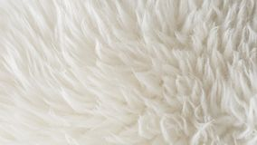 White soft wool texture background, seamless cotton wool, light natural sheep wool, close-up texture of white fluffy fur, wool wit. H beige tone for designer Stock Image